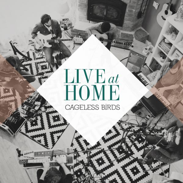 Cageless Birds Live at Home